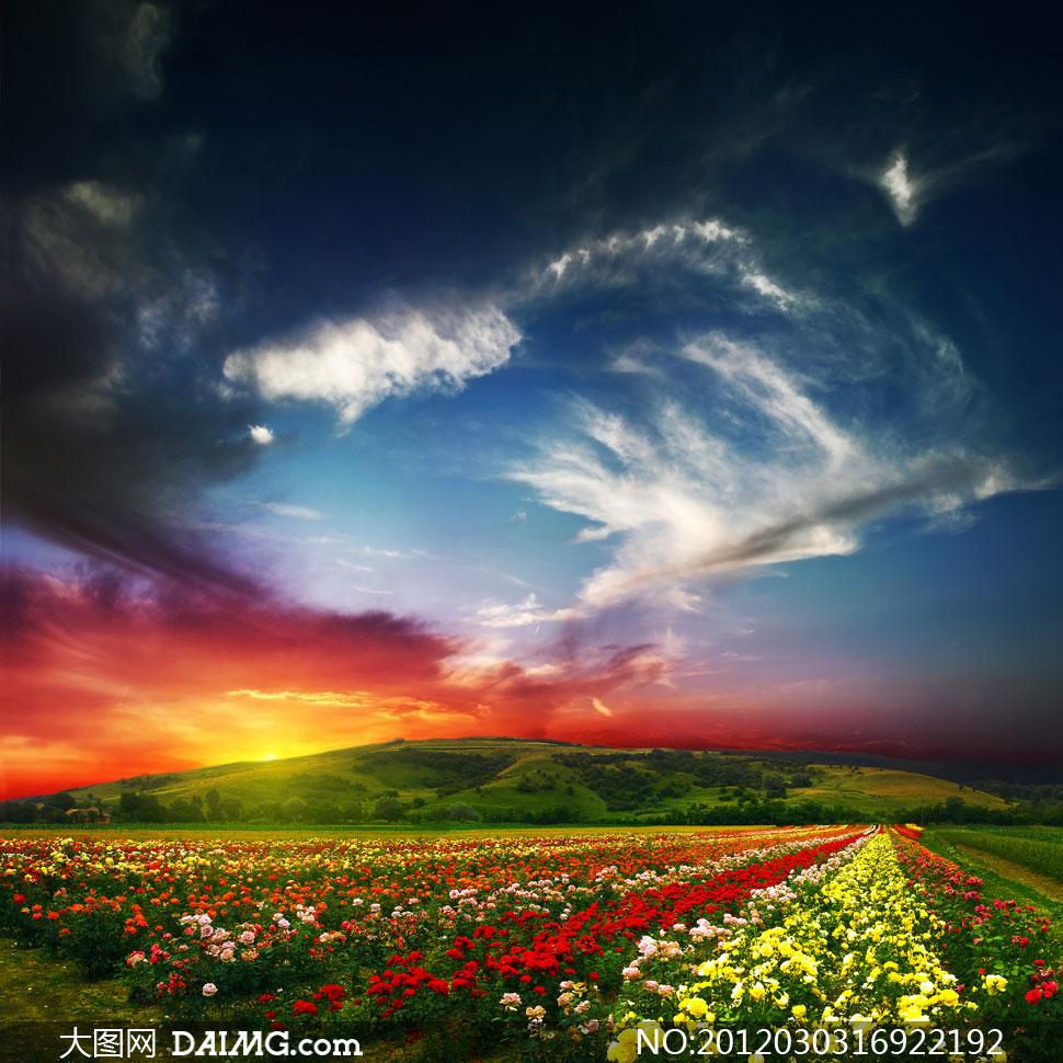 鲜花烂漫春天自然风景高清摄影图片
