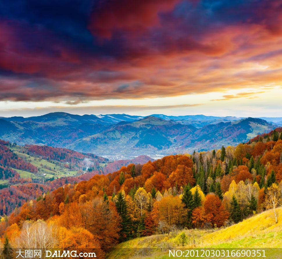 山谷里的樹木自然風景高清攝影圖片