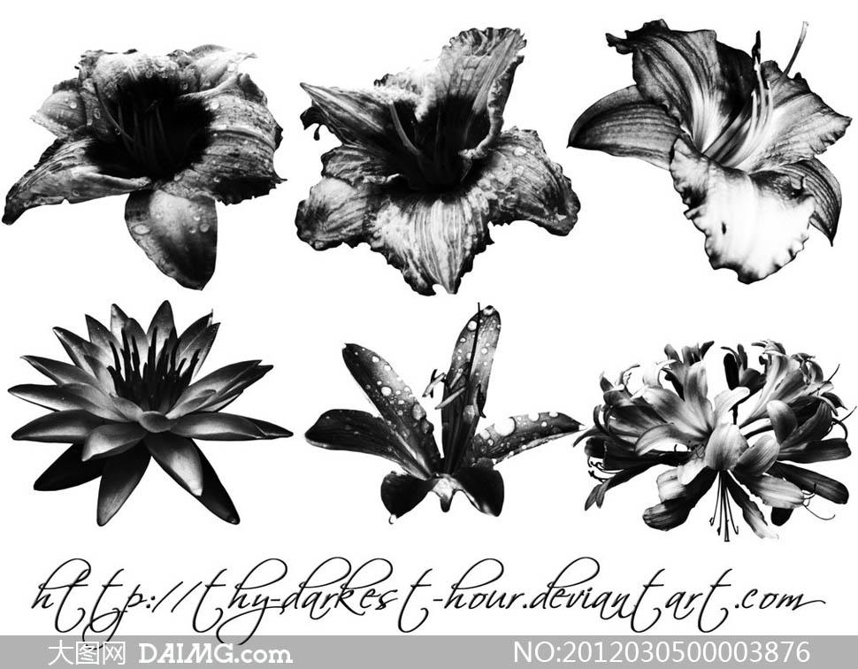 百合花朵简笔画图片展示