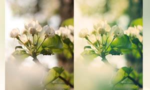 花朵绿色清爽色调色动作