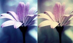 花朵单单色调调色动作