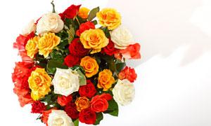 多种颜色玫瑰组成的花束高清摄影图片