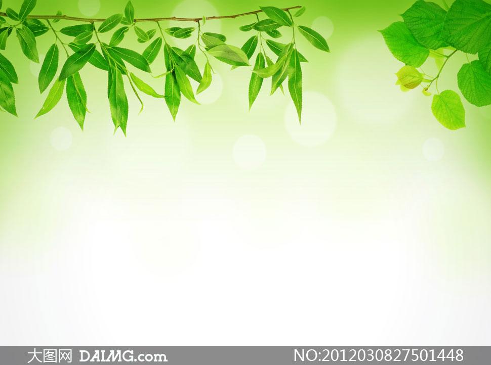 春天里的清新树叶特写摄影高清图片