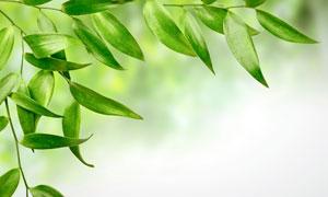 春天清新树叶散景摄影高清图片