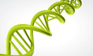 DNA基因序列链模型高清图片