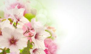 春天里的鲜花特写摄影高清图片