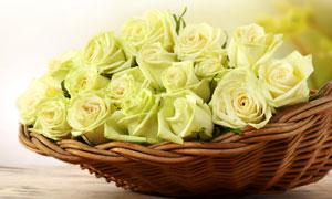 篮子里的黄色玫瑰花束摄影高清图片