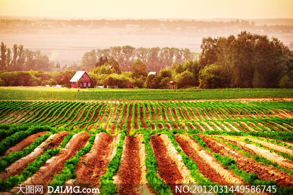 浓重色彩乡村成垄庄稼地摄影高清图片