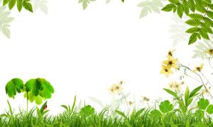 春天绿叶与青青草丛高清图片