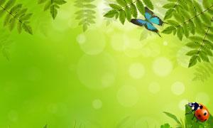 绿叶青草与绿色散景背景高清图片