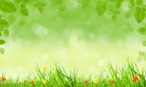 花草绿叶春天气息背景高清图片