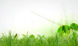 春天绿色草丛里的瓢虫高清图片