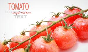 带着水珠的西红柿微距摄影高清图片