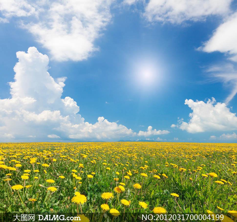 蓝天白云花朵风景图片