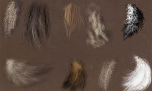 动物绘画毛发笔刷