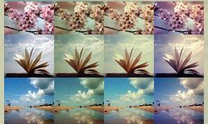 花朵照片冷艳效果调色动作