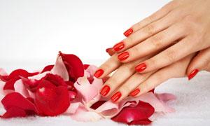 玫瑰花瓣与一双手摄影高清图片
