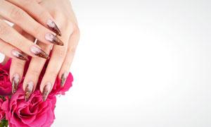 美甲双手与鲜艳花朵摄影高清图片