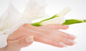双手与白色鲜花特写高清摄影图片