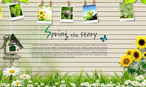 春天晾晒的照片与向日葵花丛PSD分层素材