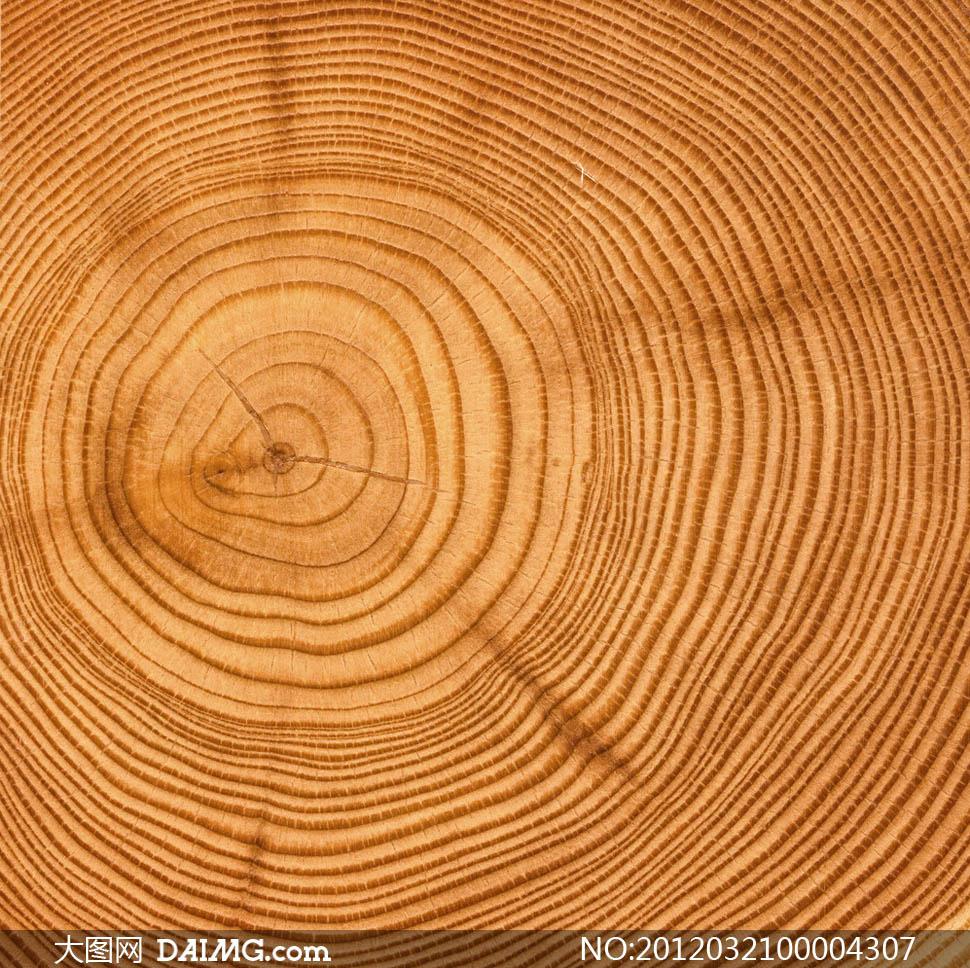 树木年轮高清摄影图片
