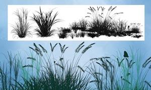 小草和草丛笔刷