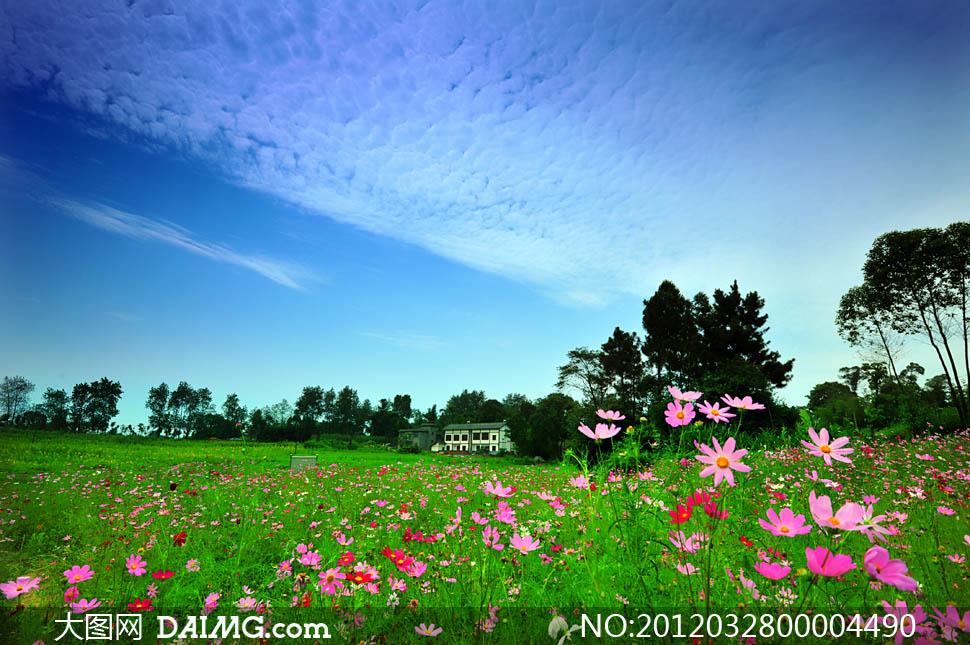 大图首页 高清图片 自然风景 > 素材信息          云彩下草地和树林