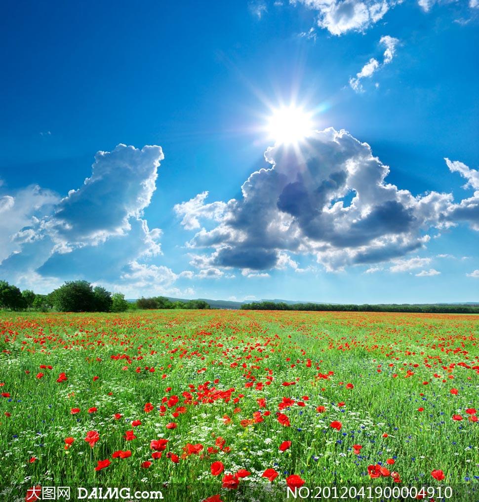 阳光下的野花草地摄影图片