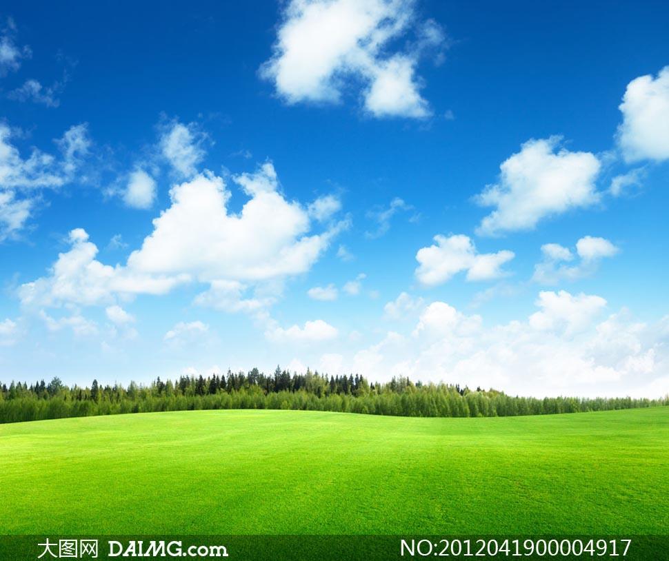 蓝天白云下的树林和草坪摄影图片