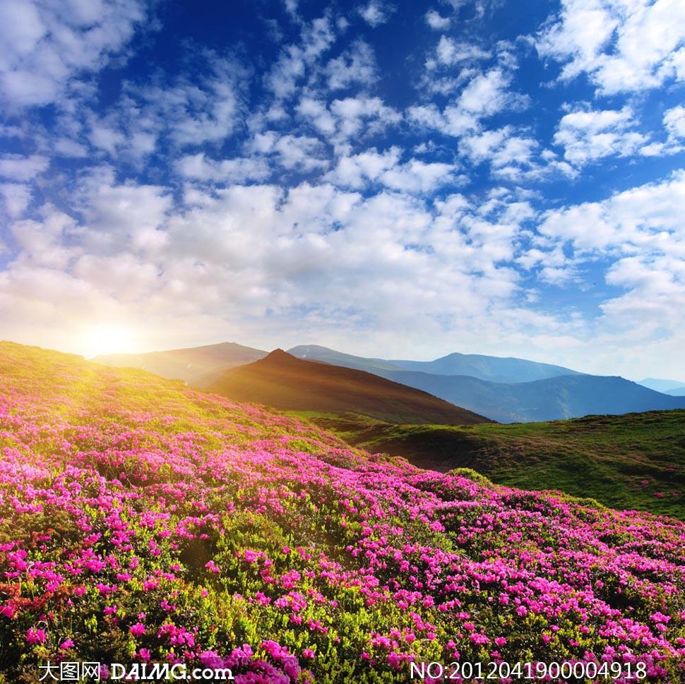 qq飞车小橘子邪恶照 漫山遍野橘子 漫山遍野的花