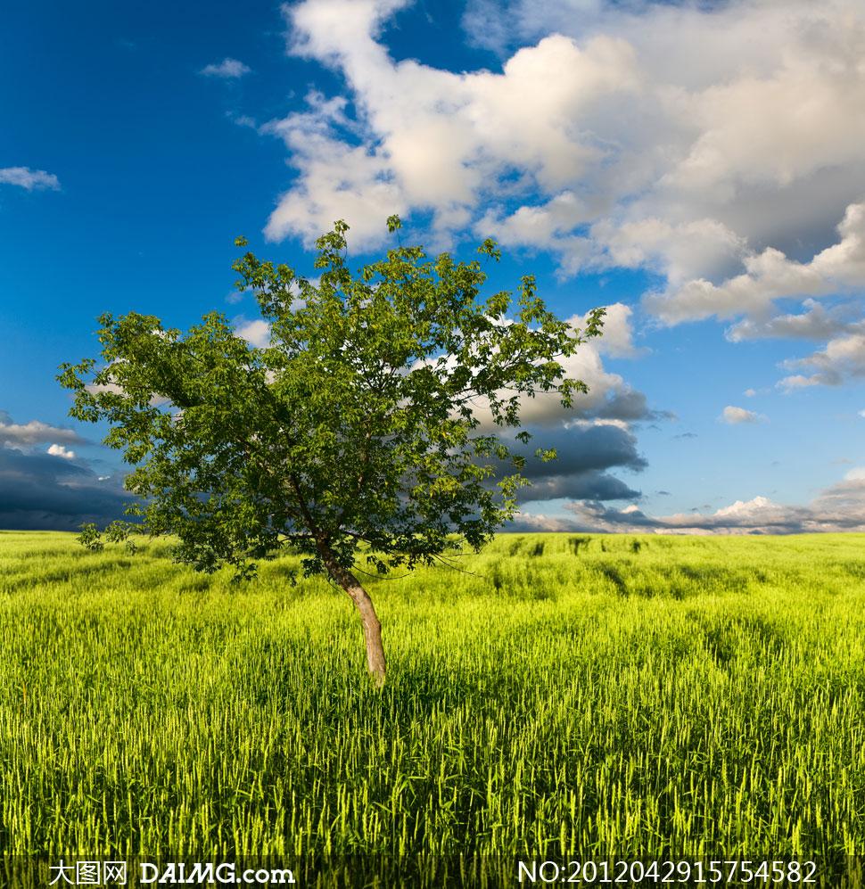 蓝天白云草地大树风景摄影高清图片