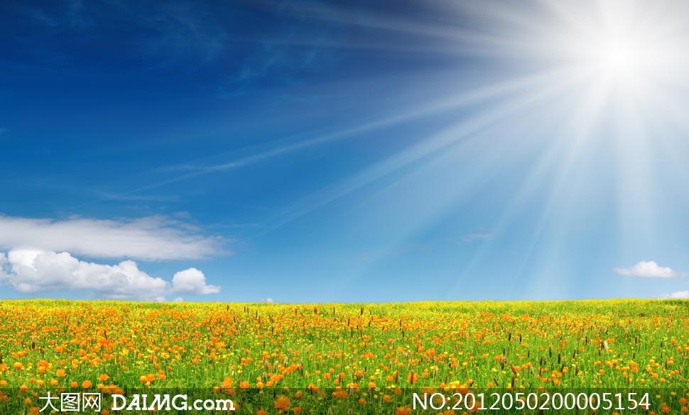 阳光下的花朵和草地摄影图片