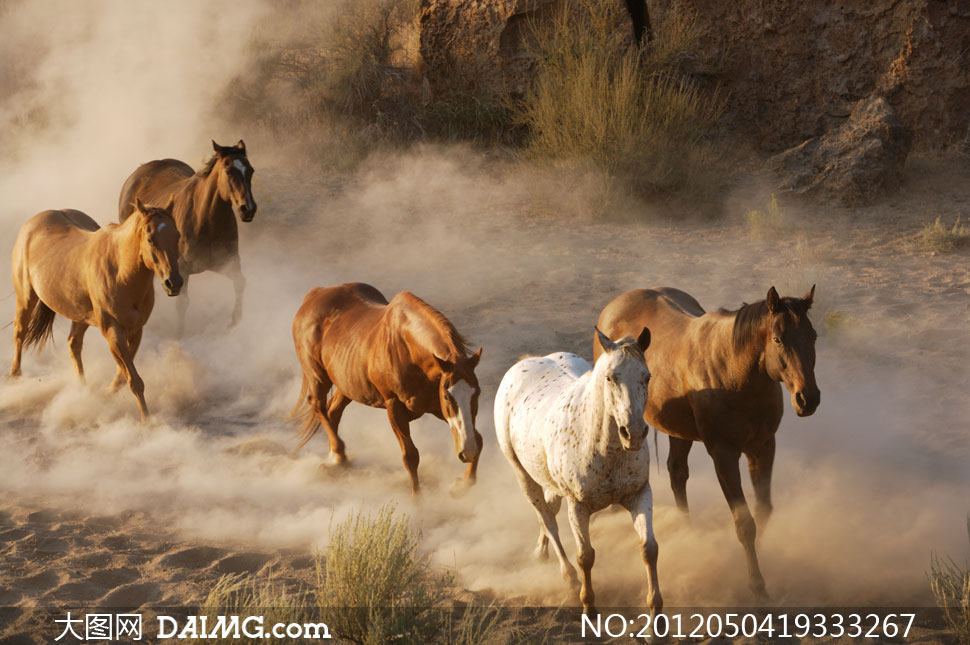 奔跑的马群摄影高清图片 - 大图网素材daimg.com图片