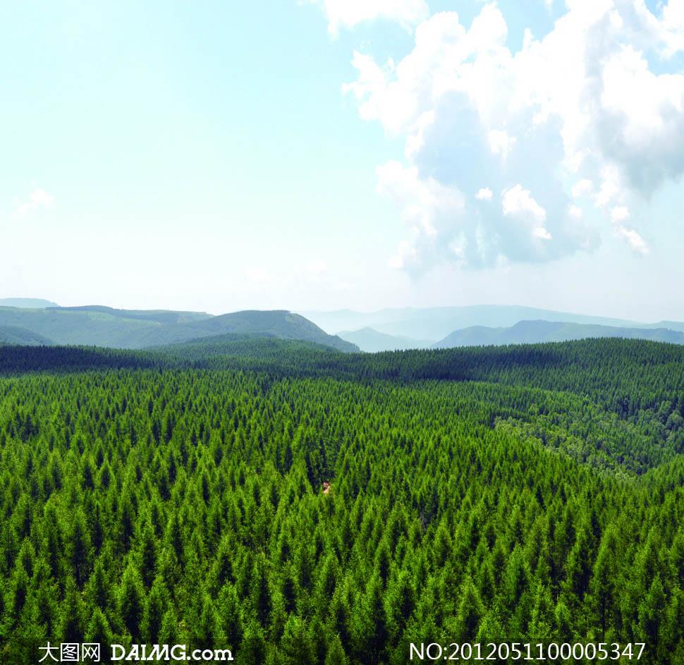 树木游人风景蓝天天空白云云彩云朵森林景观自然风景自然景观摄影高清