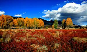 秋季野外自然景观摄影图片