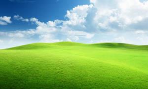蓝天下绿色清新草地摄影图片