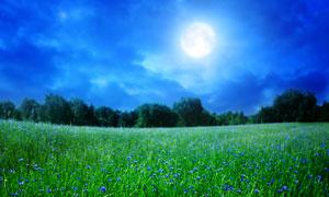 明月与蓝色小花草地摄影高清图片