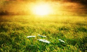 草地里的白色小花颗粒感摄影高清图片