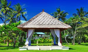 夏季热带风情自然风光摄影高清图片