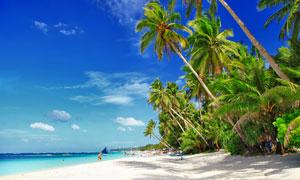 夏天海边椰树沙滩风光摄影高清图片