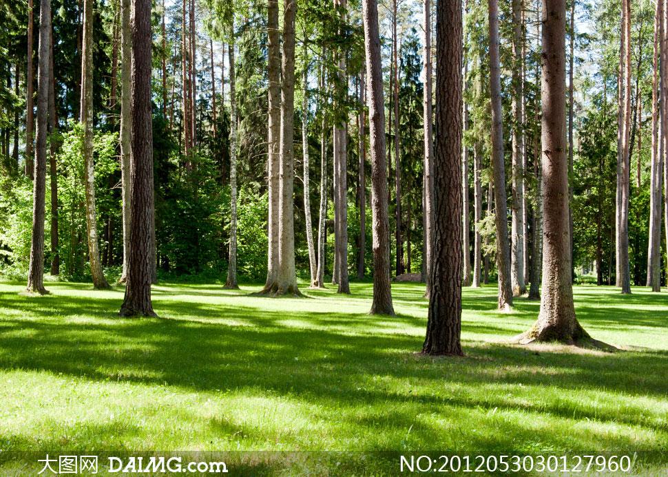 夏天树木林立的树林摄影高清图片图片