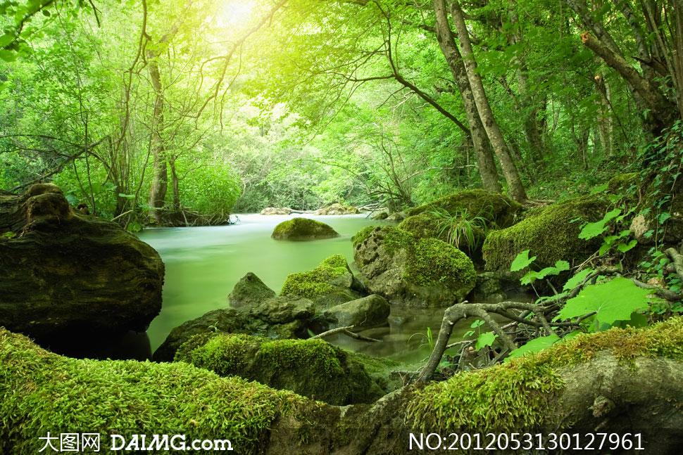 树林与长满青苔的石头摄影高清图片