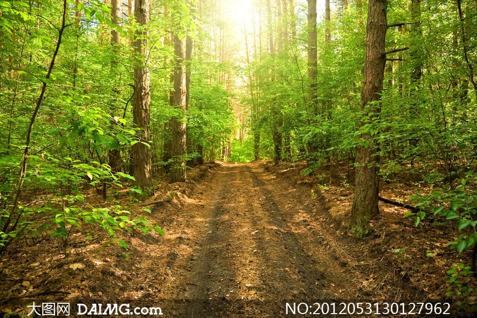 高清图片 自然风景 > 素材信息          秋天大树与林间小路摄影高清