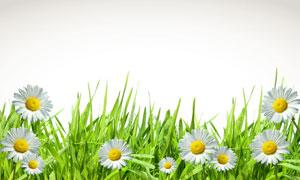 素材 草丛/草丛里的白色小雏菊花朵高清图片