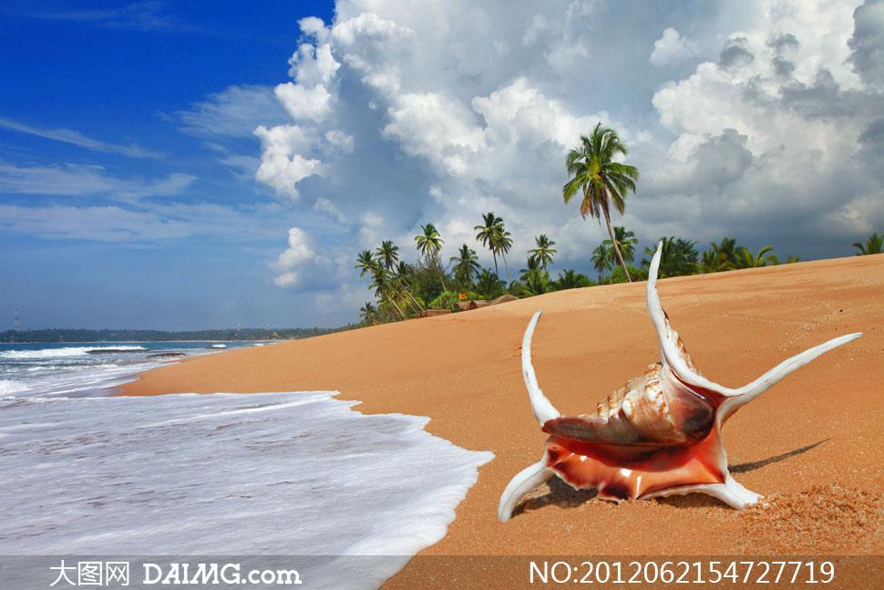 热带海滩上的贝壳风光摄影高清图片