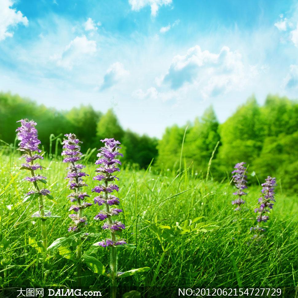 大图首页 高清图片 自然风景 > 素材信息          蓝天白云阳光