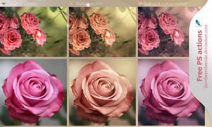 花朵照片废旧效果和红色效果调色动作