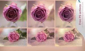 玫瑰花照片唯美淡红效果调色动作