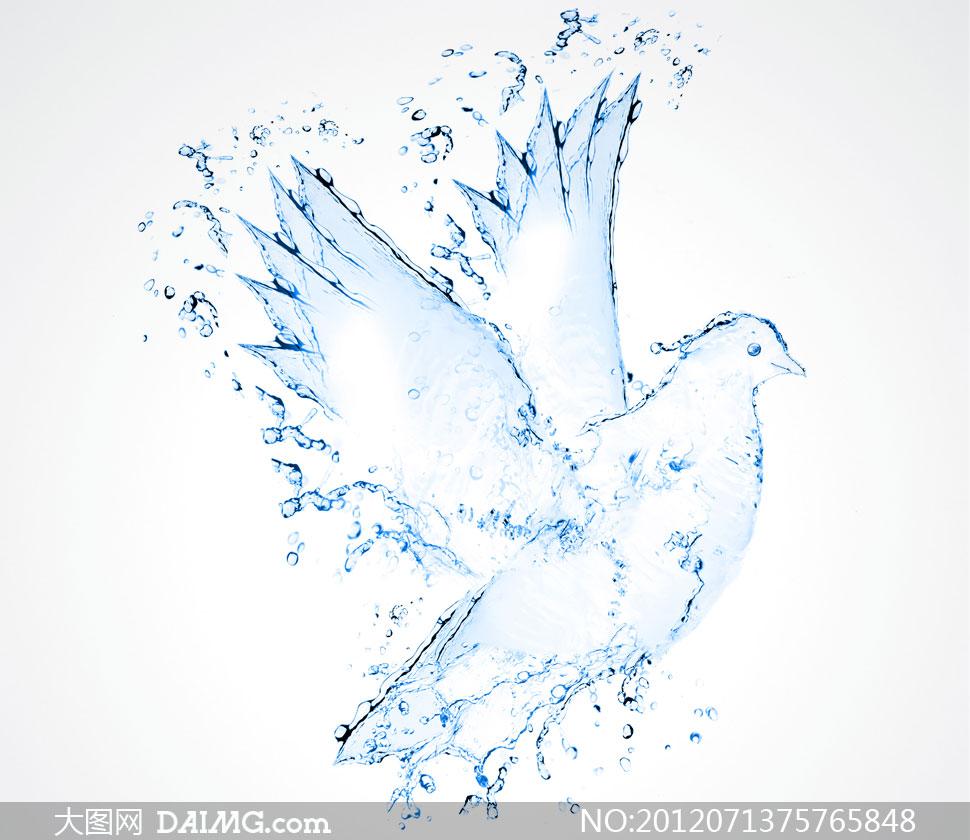 高清大图图片素材创意图案鸽子小鸟水滴水珠