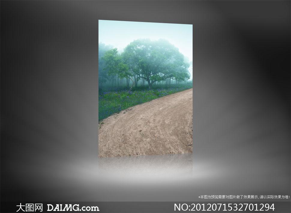 雾蒙蒙的清晨树林影楼摄影背景图片